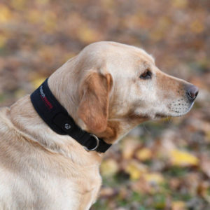 ProtechMasta Dog Collar
