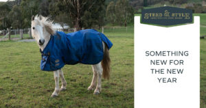 steed and style tip new year present for horses